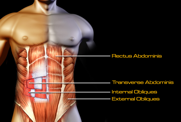 six pack abs anatomy - SixPackFactory